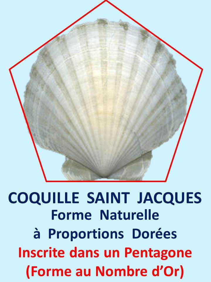 coquillestjacques